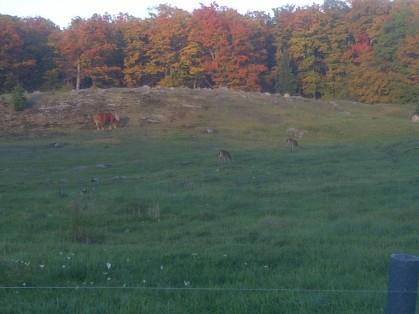 deer and pony