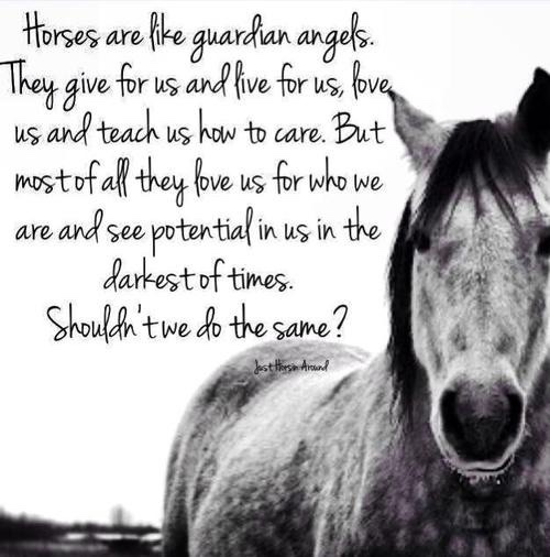 horses see potential in us at darkest of times...